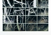 Wald, 16 colored photo prints, 2 x 3 m, Vienna, 2006